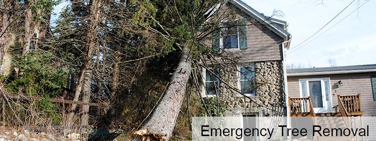 Emergency Tree Removal Worcester MA