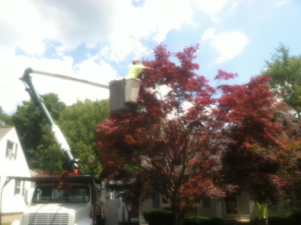 Tree Maintenance and Care Shrewsbury MA